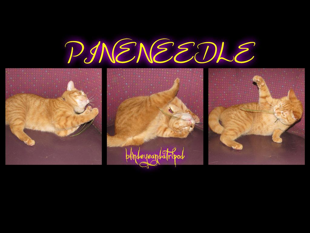 pinetime
